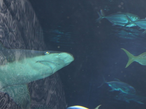 Too close for comfort....at the Henry Doorly Zoo Aquarium
