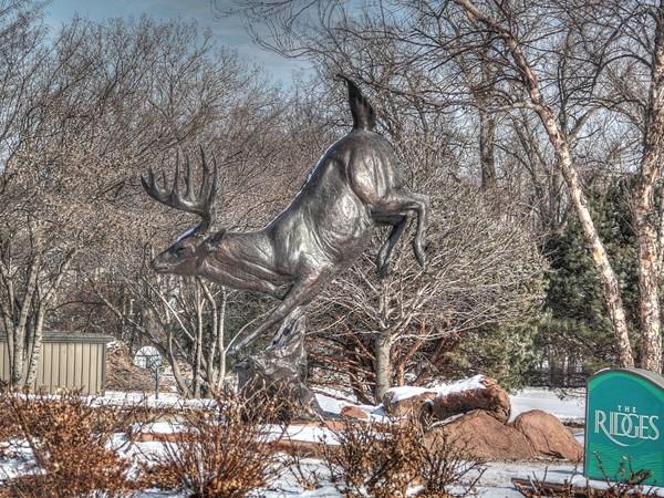 Amazing deer sculpture in the Ridges.