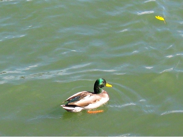 Heartland of America Park in Omaha is a great place to feed the ducks