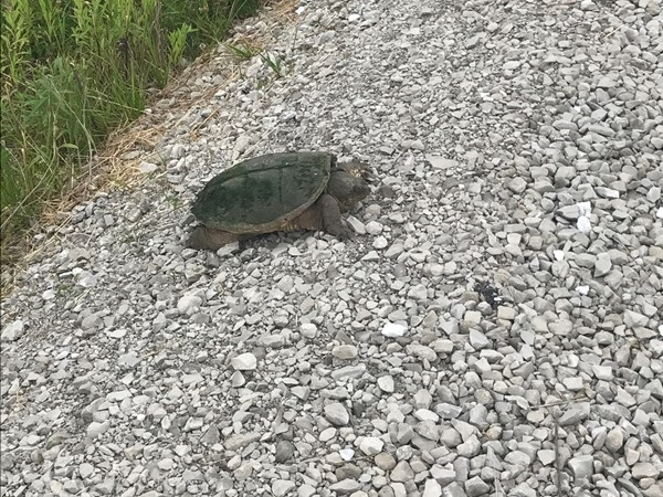 You never know what wildlife you will see at Neal Smith National Wildlife Refuge