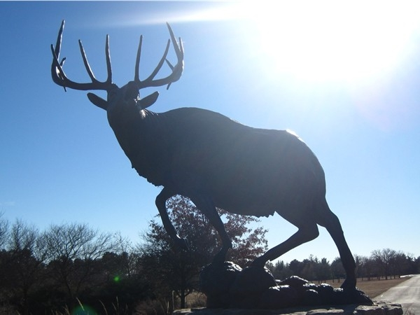 The elk statue at Pioneers Park