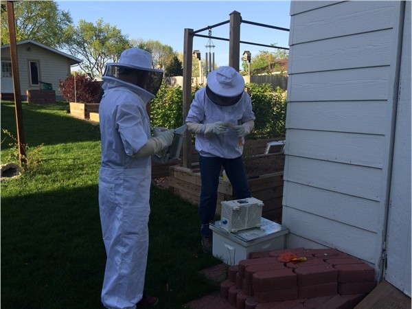 Beekeeping in Urbandale. Pollinating the backyard raspberries, blueberries and vegetable gardens.