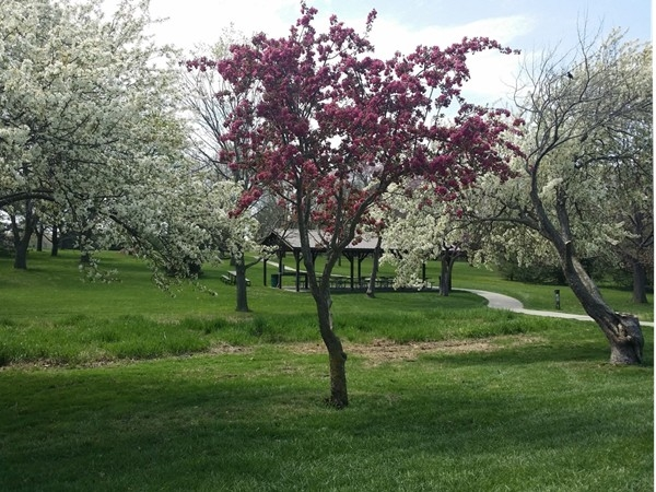 Looking for a picnic spot in Lincoln?  Mahoney Park has spots for you, and you can hear the birds.