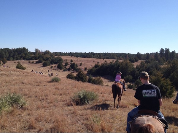 Halsey National Forest is an amazing place to ride horses