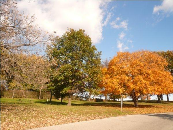 Fall colors at Thomas Mitchell Park