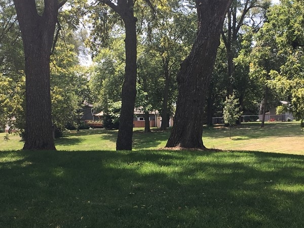 Chapel Hill Park is a perfect place for a picnic