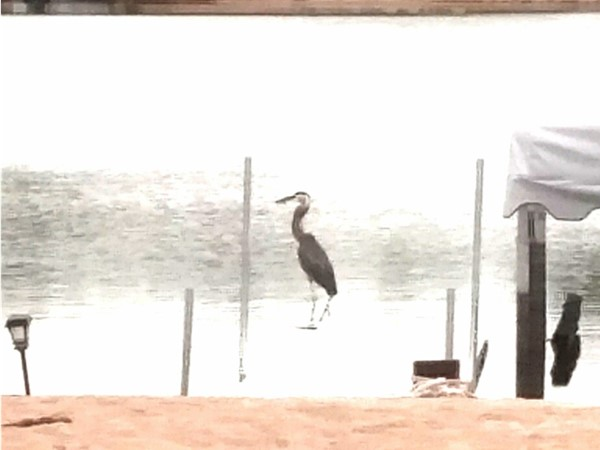 We saw this big heron when hanging out on lake one. Havenmakers loves Cedar Creek