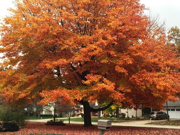 Autumn has arrived in Portage