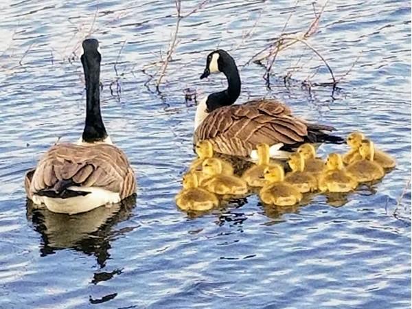 New arrivals in Betsie Bay