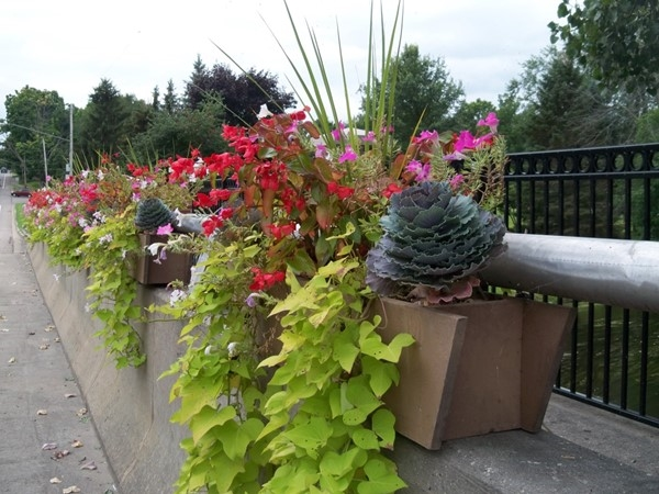 Our local garden club does a fantastic job of putting in planters along the river for all to enjoy