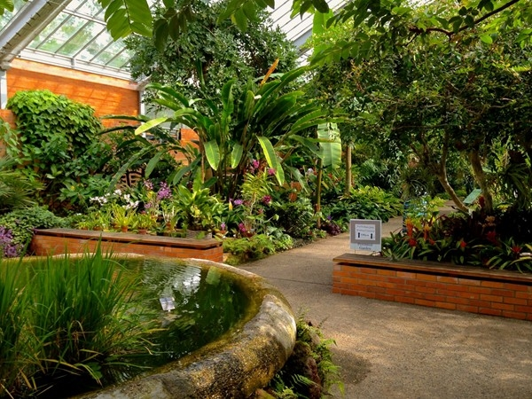 The beautiful Matthaei Botanical Gardens Conservatory