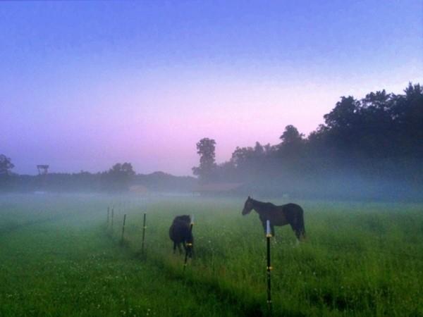 A misty dawn at a Rose Township horse farm