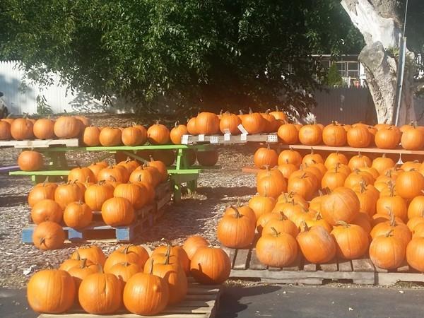 Lyons Farm Market has fresh local produce 3 seasons through the year