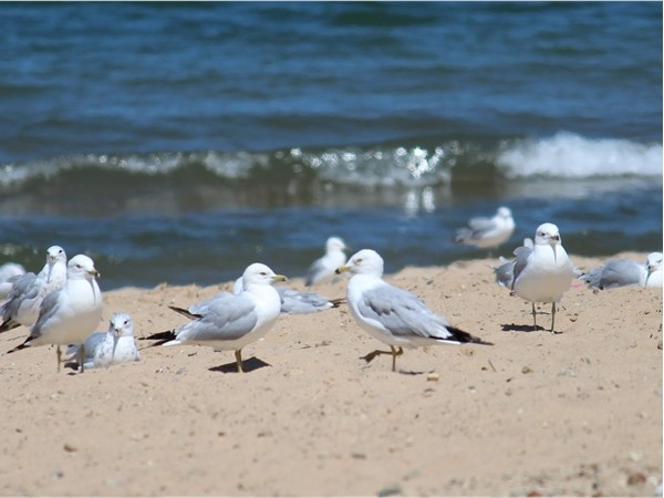 Seagulls enjoying the sun at Lions Park Beach