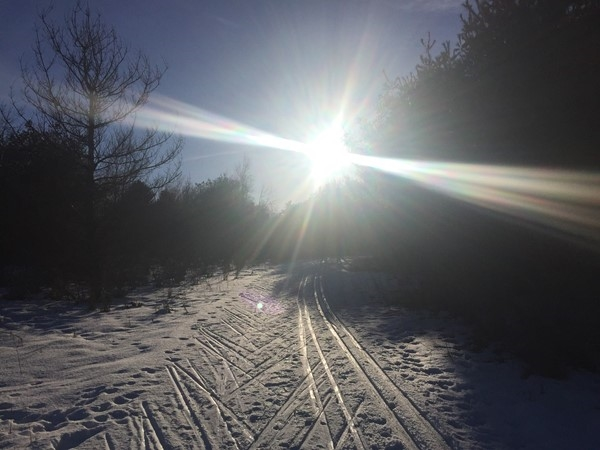 Take your pup for a ski or skijour on the VASA 3K Nordic ski trail just east of Traverse City