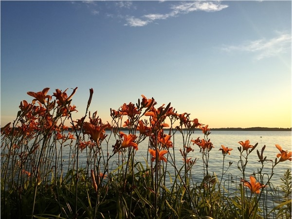 Peaceful Elk Lake shoreline lilies at sunset
