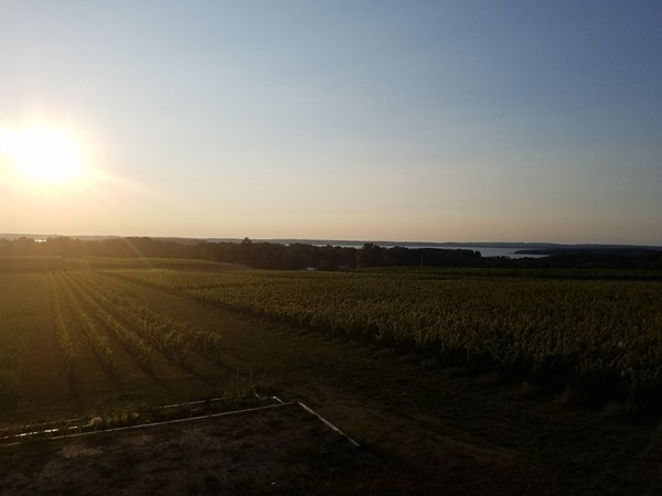 Old Mission Peninsula September sunset at Bonobo Winery. It's almost like being in Tuscany