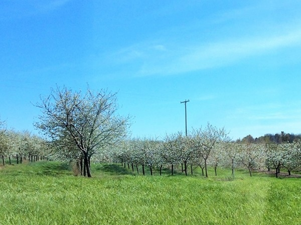 Spring view of one of the many fruit orchards in the Sister Lakes Area