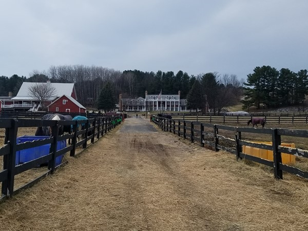 Black Star Farms is a great place to take kids to see animals or drink fabulous local wine