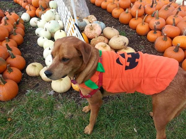 It's pumpkin time in Goodrich