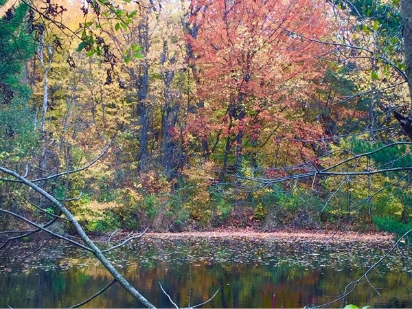 Beautiful color on this Kingsley pond