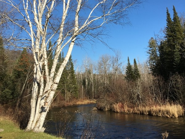 Paddle the beautiful, quick moving Boardman River south of Traverse City