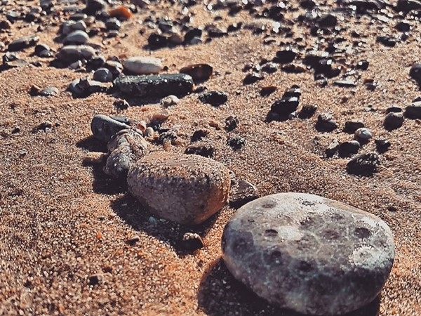 South Manitou treasure, Petoskey stone