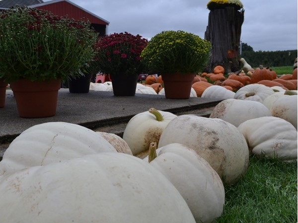 Local orchards and farms have all your fall specialties