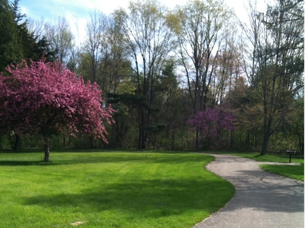 Spring at the Cass River Roadside Park