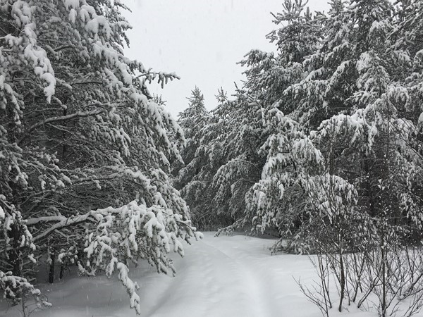 The back roads are thick with snow. We snow shoe in to show properties