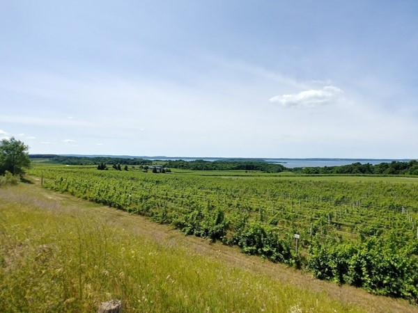 Old Mission Peninsula...love these vineyards and West Bay views