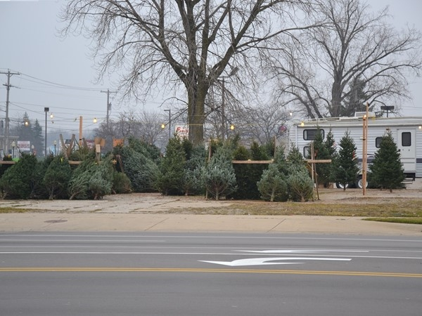 Many surrounding areas offer local and homegrown Christmas trees during the holiday season