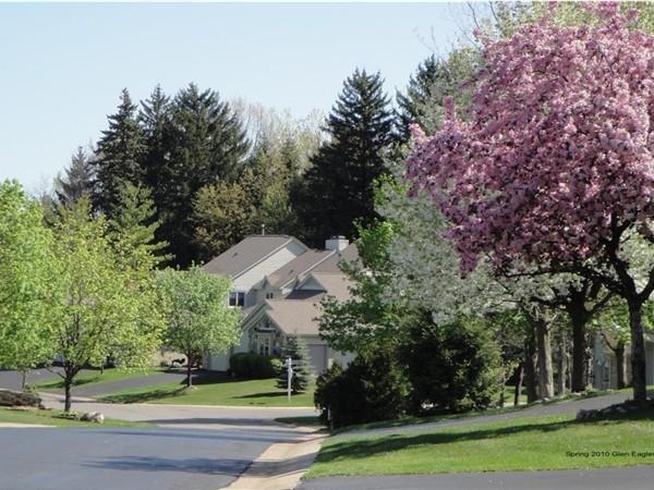 Springtime in Glen Eagles Drive