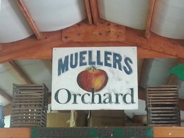 Meuller's Orchard, Linden