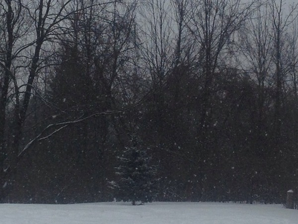 Snow blankets our winter wonderland in Grand Blanc Township!