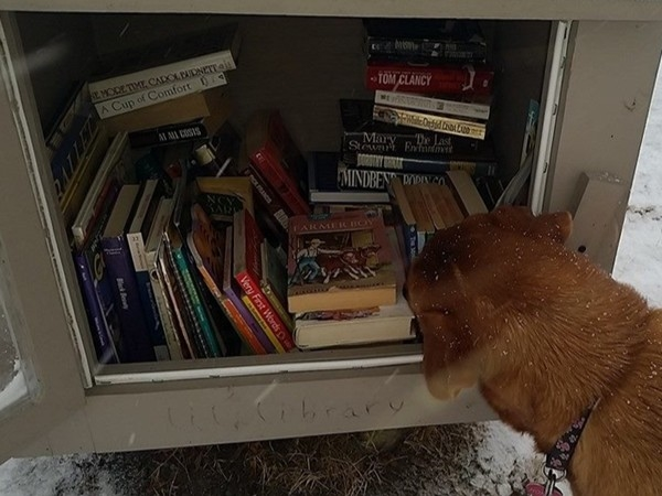 Cold winter nights are a good time for reading! A nice variety is available at the free Lil' Library