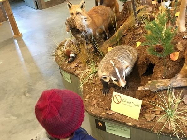How big is a badger?  Kids explore this Discovery Center and see animals from their storybooks