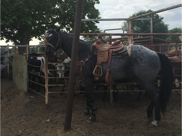 Team roping practice at the 4T Ranch in Haskell County
