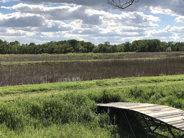 Unique wetland habitat east of Hammon at the Washita Wildlife Refuge