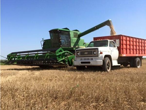 Western Oklahoma wheat harvest