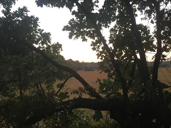 Nothing like watching the sun come up while sitting in a Haskell County oak tree