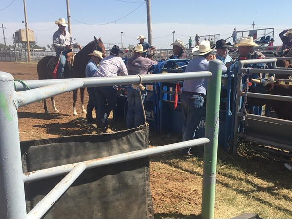 High School rodeo action in Beaver in the panhandle