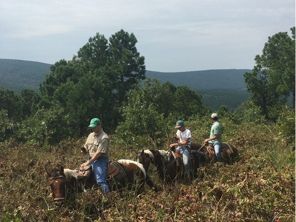 Showing property SE Oklahoma style on horses with a pack of hog dogs in the Sand Bois Mountains