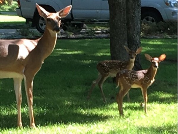 What a great year for new fawns in Dover Pond. Just two of the many new babies