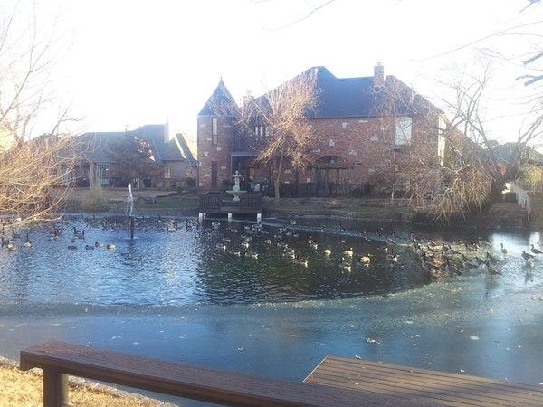 The geese are flocking to Willow Lake, and it's frozen in some spots