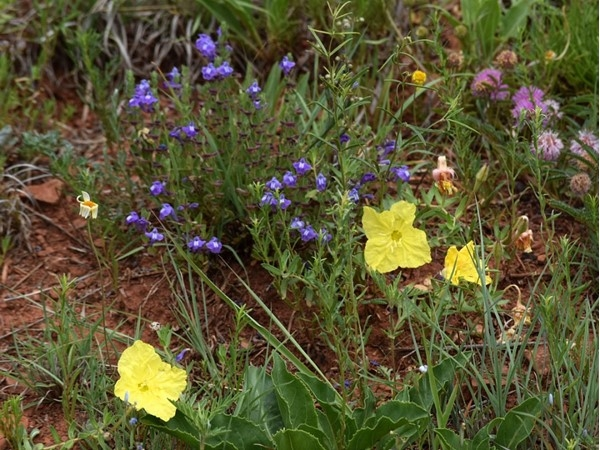 Wild flowers in bloom at Dead Warrior Lake north of Cheyenne