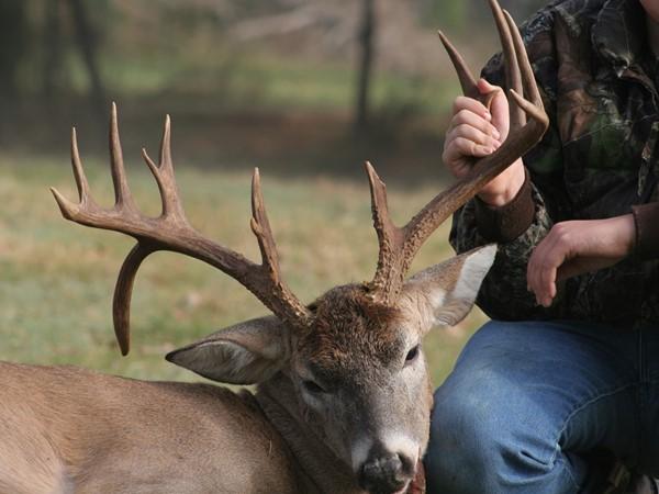 Whitetail droptine deer - Hunters dream - Southeast Oklahoma