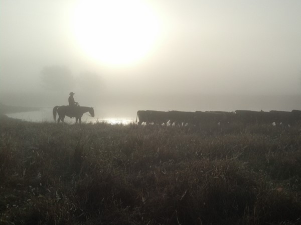 Foggy morning on the River Basin Ranch here in Nowata County