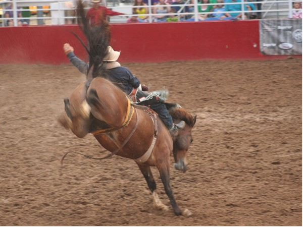 Cowboy up!! Bronc Riding at its best