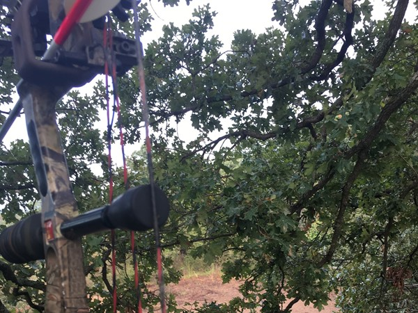 Tree stand sitting in Haskell County in Southeastern Oklahoma